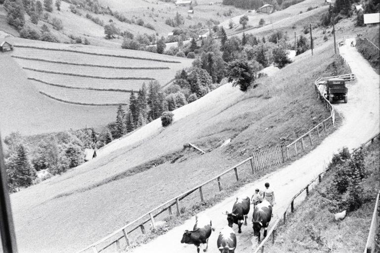 Die ersten Gäste helfen beim Kühe-holen © Familie Raab aus Köln