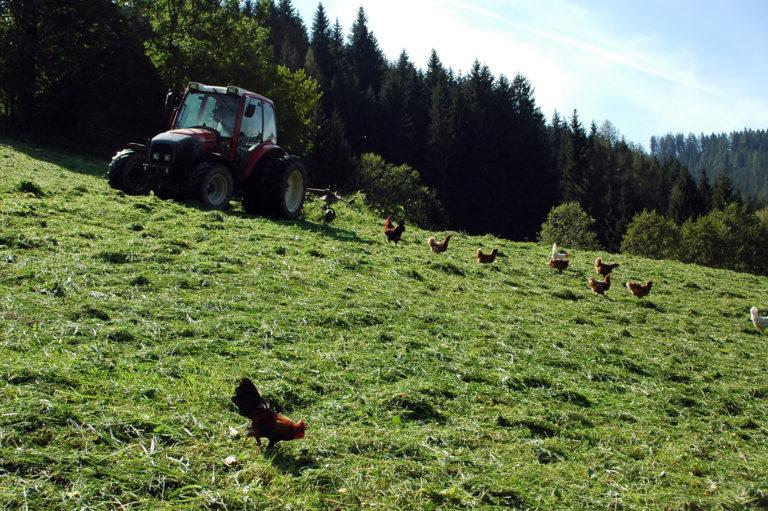 Hennen und Traktor im Einsatz