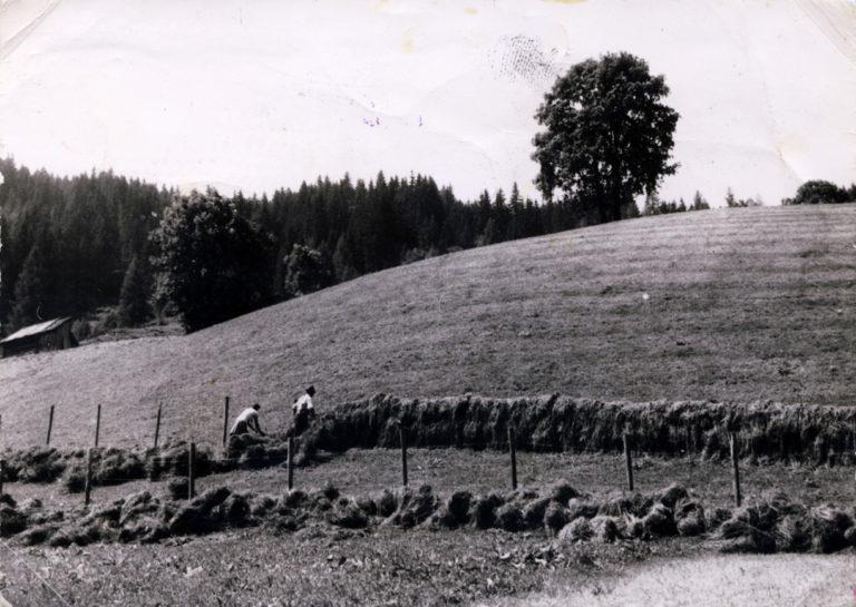 Bei der Heuernte am Hausleitenbühel, ca. 1960